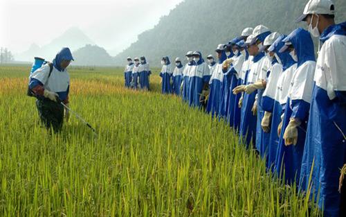 Nâng cao nhận thức về an toàn lao động trong sản xuất nông nghiệp